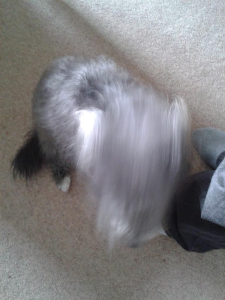 Maisie-dog is not a fan of sitting still.
