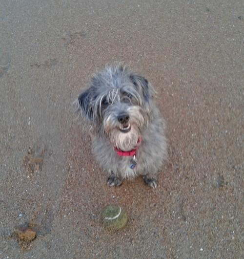 Maisie Expectant