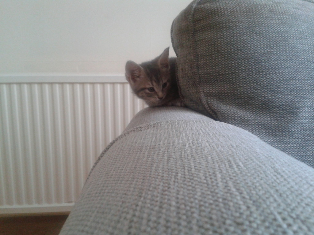 Look! Zelda matches our sofa - we obviously had no choice but to adopt her...